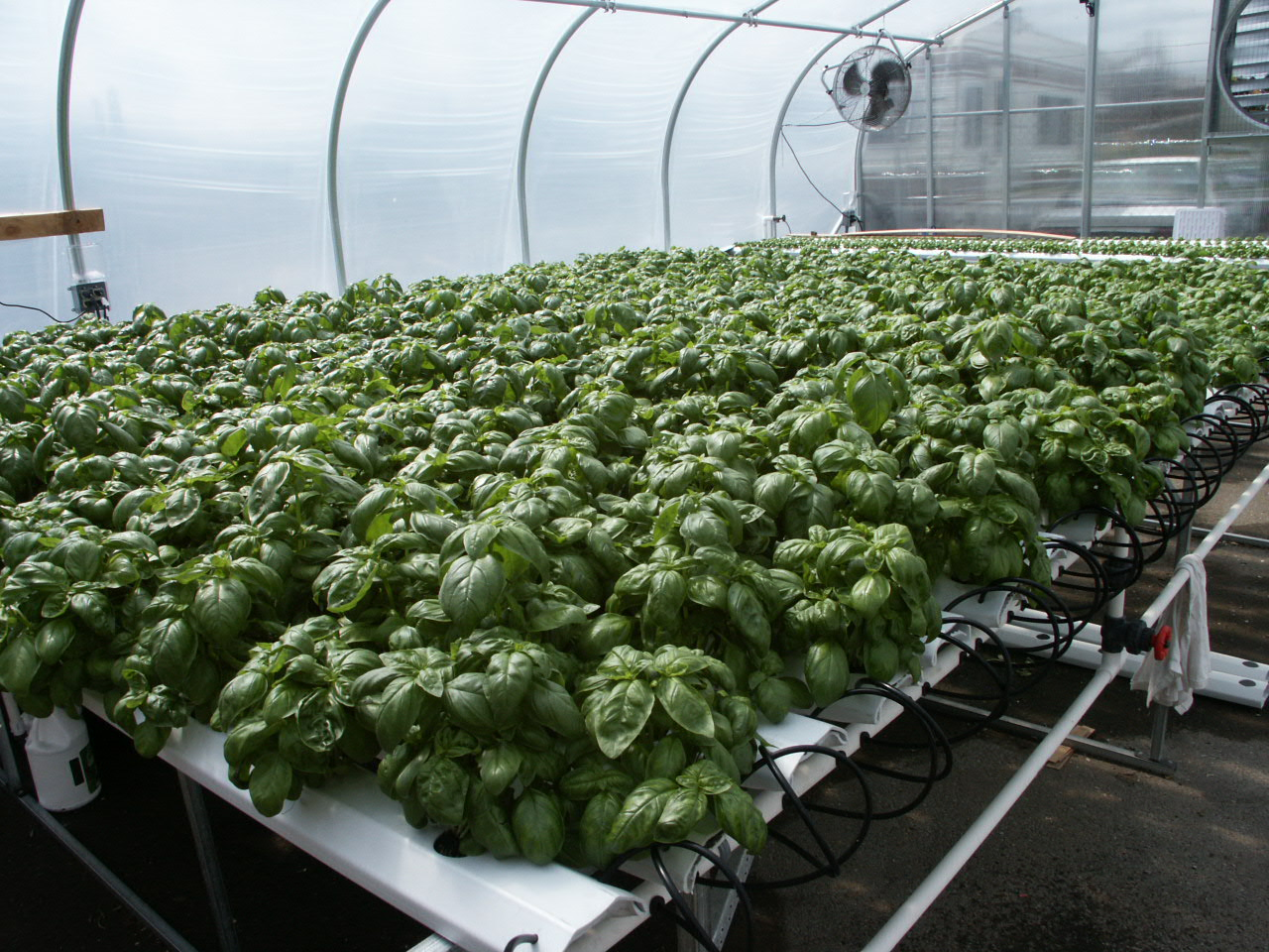 how to set up hydroponic watering system