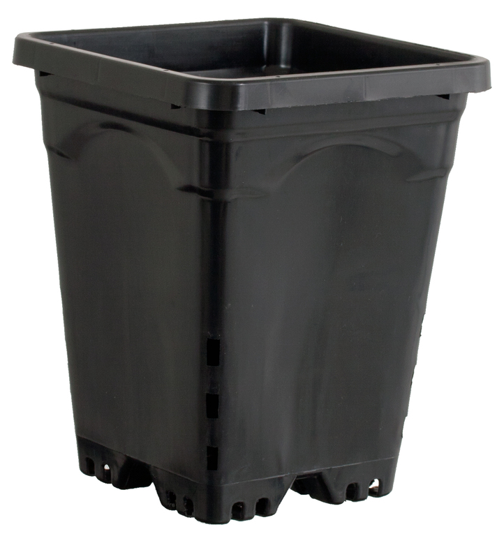 "6""x6"" Square Black Pot, 8"" Tall, case of 50"