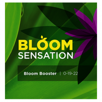 Bloom Sensation 1 Liter (6/Cs)