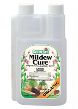 Safergro Mildew Cure 32oz RTU (6/CS)