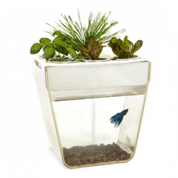 "Back to the Roots - Aquafarm 3 Gallon Fish Tank, 12"" X 8"" X 12"""