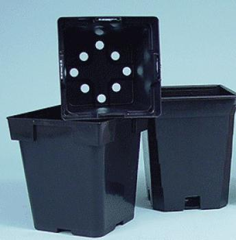 "Square Black Pot - Magnum 6"" x 6"""