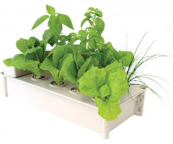 Salad Box Hydroponic Salad Garden Kit (Complete Grow System)