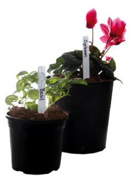 Plant Markers (50/pk)