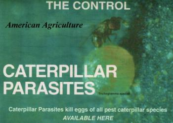 Caterpillar Parasites. 5000 per container