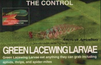 Green Lacewing Eggs. 1000 per container