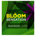 Bloom Sensation 500 ml (12/Cs)