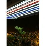 FL296 4' Pentron Red Fluorescent Tube