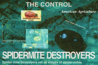 Spider Mite Destroyers. 50 per container