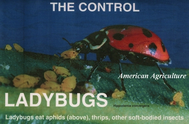 Lady Bugs. 1500 per container (Ladybugs)