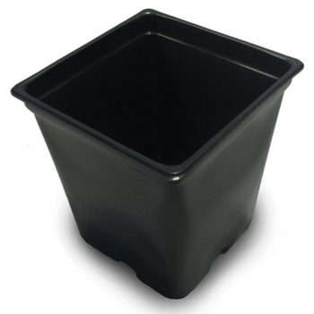 "3.25"" x 3.25"" x 3.5"" 0.5qt Square Pot (case of 1200)"