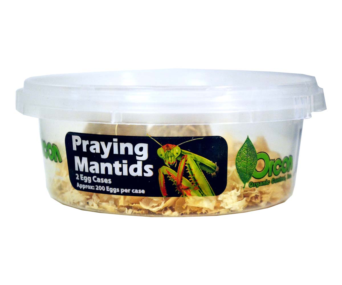 Orcon 2 Praying Mantid Egg Masses (200 Eggs/Mass) Case of 20 (Special Order)